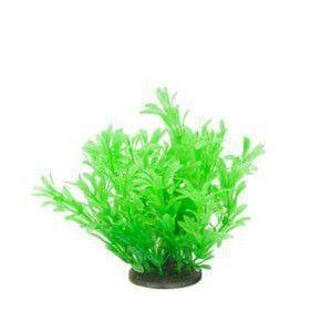 Roślina Premium Mini RP 216 ATG Line