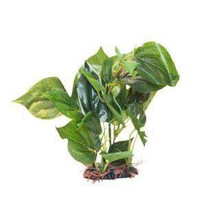 Roślina Premium Mała RP 311 ATG Line