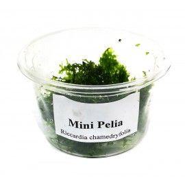 Mini Pelia - porcja w pudełku