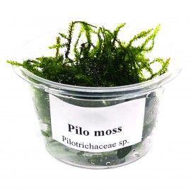 Pilo moss - porcja w pudełku