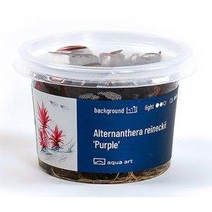 Alternanthera reineckii Lilacina Aqua Art