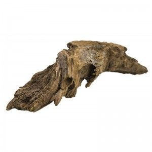 Korzeń mangrowca S 18-28 cm