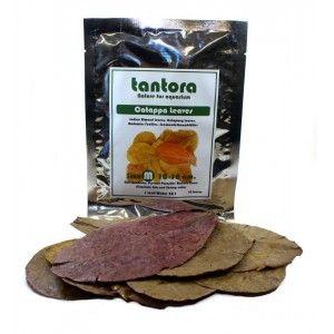Tantora Cattapa Leaves Nano 15 szt.