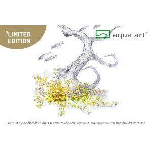 Staurogyne repens Aqua Art