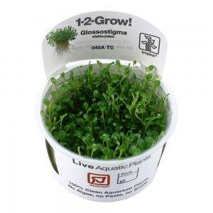 Glossostigma elatinoides 1-2 Grow Tropica