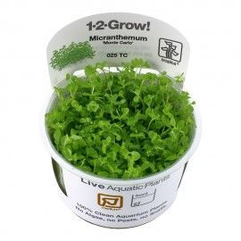Micranthemum tweediei Monte Carlo 1-2 Grow Tropica