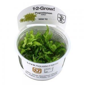 Pogostemon helferi 1-2 Grow Tropica