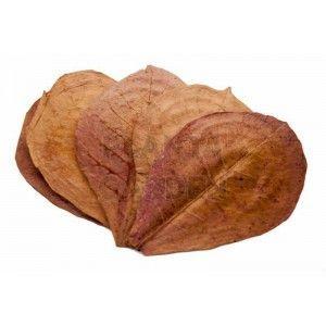 Benibachi Leaf [5 sztuk]