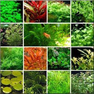Zestaw roślin na 3 plany - 36 gatunków