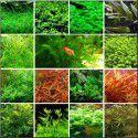 Zestaw roślin na 3 plany [15 gatunków]