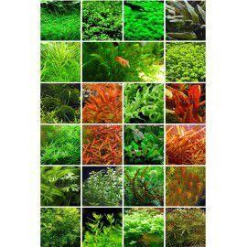 Zestaw roślin na 3 plany [23 gatunki]