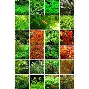 Zestaw roślin na 3 plany (15 gatunków)