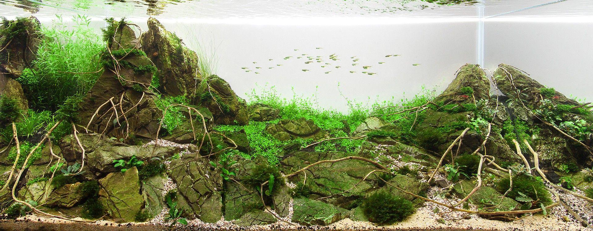 Nawożenie CO2 a pH wody w akwarium