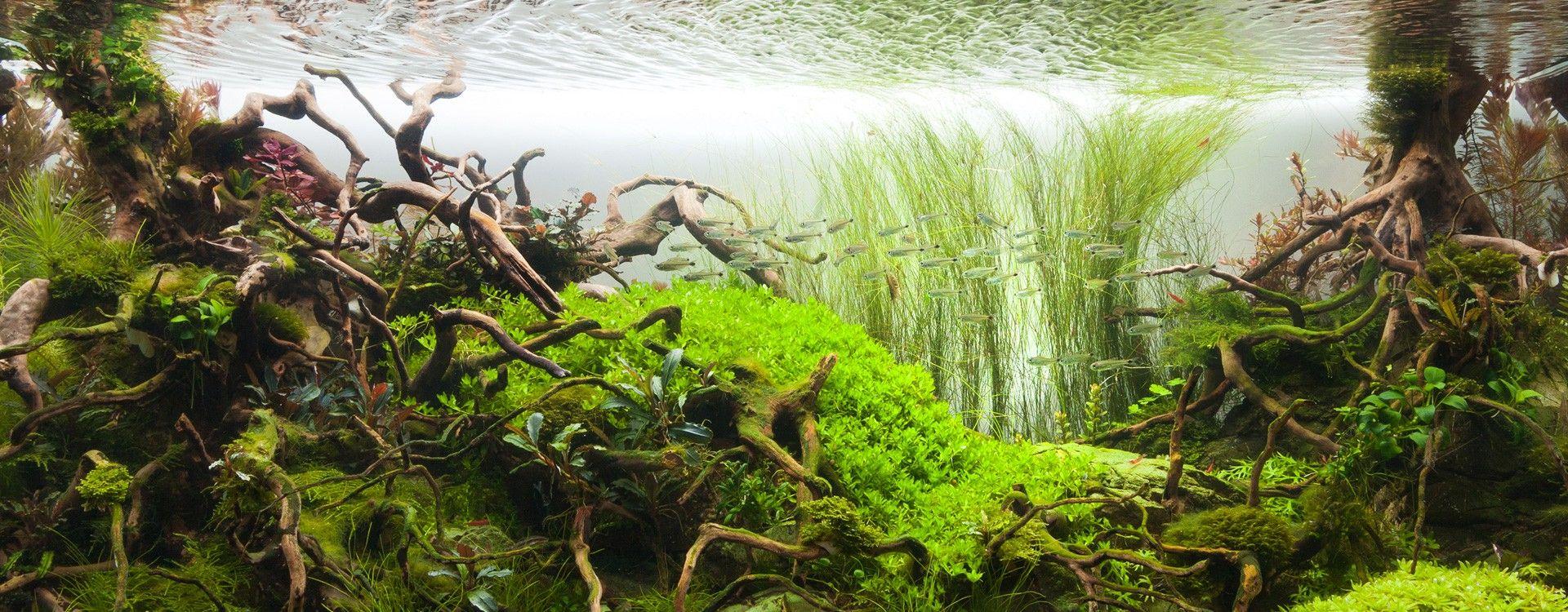 Podstawy aranżacji cz. I - wybór roślin akwariowych i rozmieszczenie planów