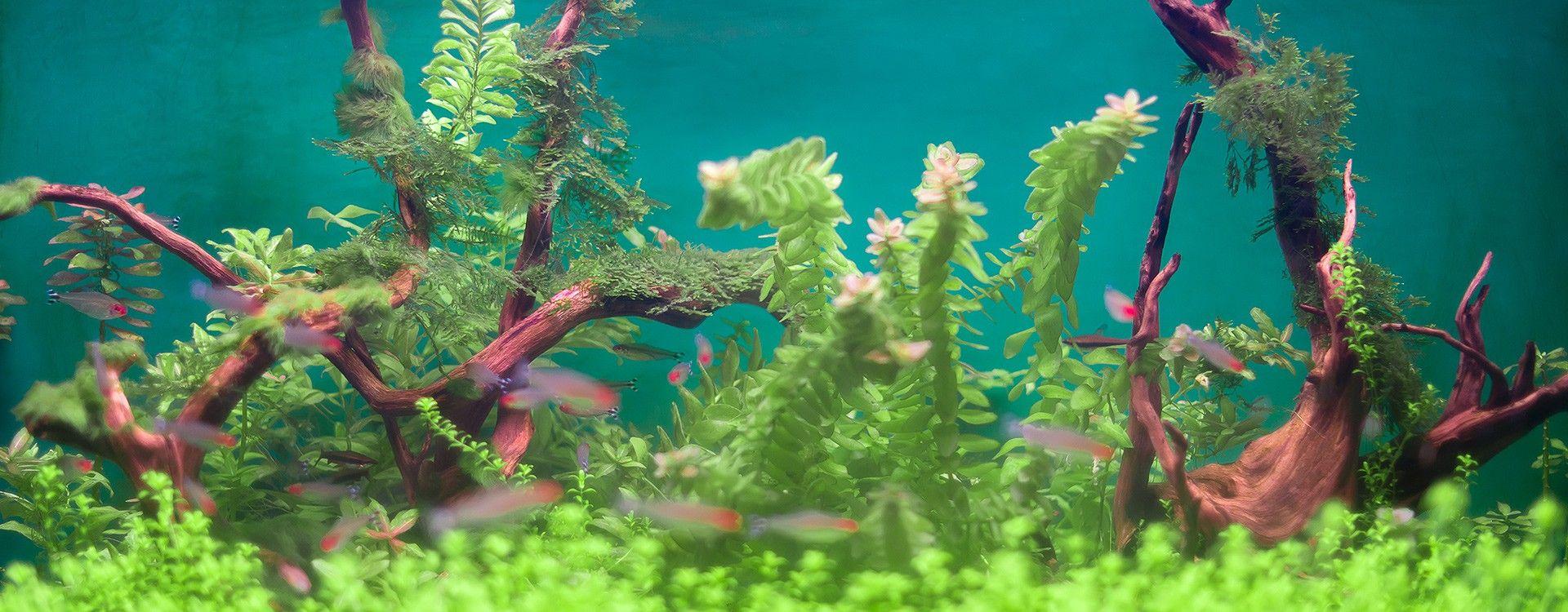 Sukces Akwarium Roślinnego Planta Garden